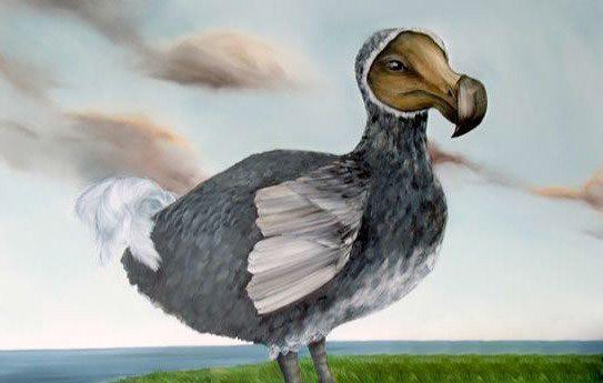 渡渡鸟灭绝之谜,疑是被人类捕杀为食