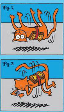 黄油猫悖论,有趣的脑洞问题(猫仇恨又加深了)