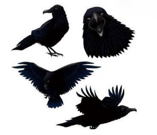 乌鸦悖论,哲学上的怪问题