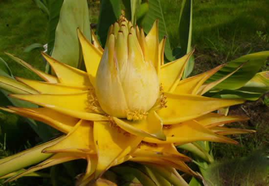 世界上花期最长的花,盘点10大全年开花的花