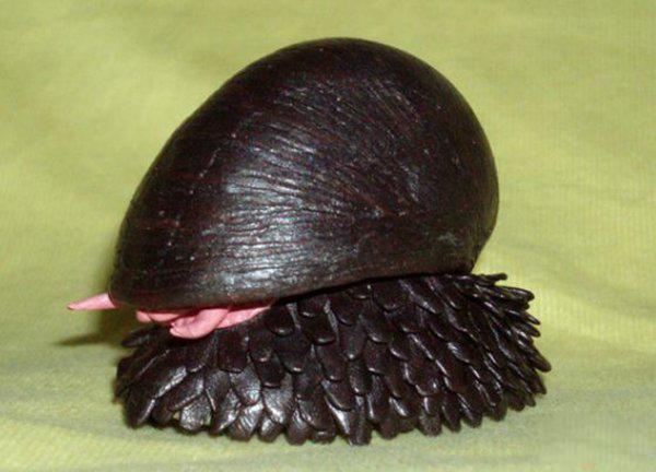 世上壳最硬的蜗牛:鳞角腹足蜗牛子弹都不怕