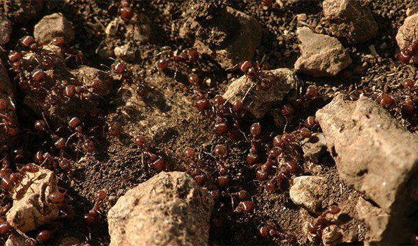 双色球2018061蚂蚁很厉害的12个原因 蚂蚁的力量有多大?