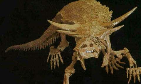 有角鳄:身长五米的美洲远古链鳄