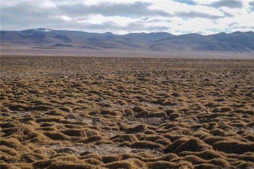 藏北无人区