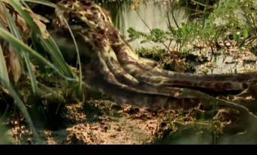 沼泽章鱼,一亿年后的新物种(没有水也能活)